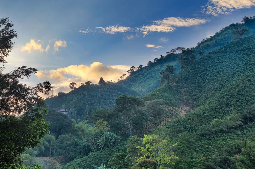 Clouds are illuminated during the sunrise at a coffee plantation near Manizales, Colombia. Andes Caffeine Coffee Colombia Farm Latin Manizales Nature Plant South Travel America Arabica Bean Caldas Chinchina Colombian  Drink Landscape Mountain Organic Plantation Robusta Triangle Tropical
