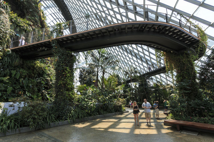 Singapore, Singapore - October 16, 2018: Inside the Cloud Forest Dome Gardens by the Bay in Singapore. On background some tourists walking by Singapore Cloud Forest Dome Flower Dome Gardens By The Bay Marina Bay Sands ASIA Waterfall Greenhouse Smart City Green Environment Conservation Exotic Flora Fern Plant Grass SuperTree Supertree Grove