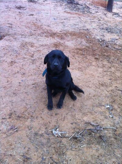 My new dog!