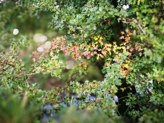 Autumn in Ireland Selective Focus Freshness Tree Outdoors Irelanddaily Eyem Gallery Autumn🍁🍁🍁 Eyemphotography PhonePhotography Nature Eyem Best Shots Nature_collection Ireland🍀 EyeEm Nature Lover Hiking Ireland Outdoor Photography Phonecamera