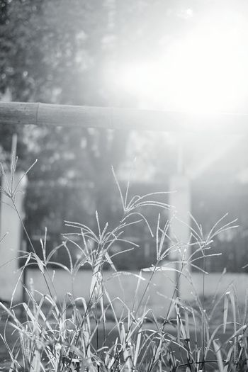 Nature Grass No People Focus On Foreground Black & White Photography Memories Fujifilm X-pro2 Hazy Sunshine Welcome To Black Side Of Road Strong Shanghai China Travel Photography Travel City Monochrome Blackandwhitephotography Welcome To Black