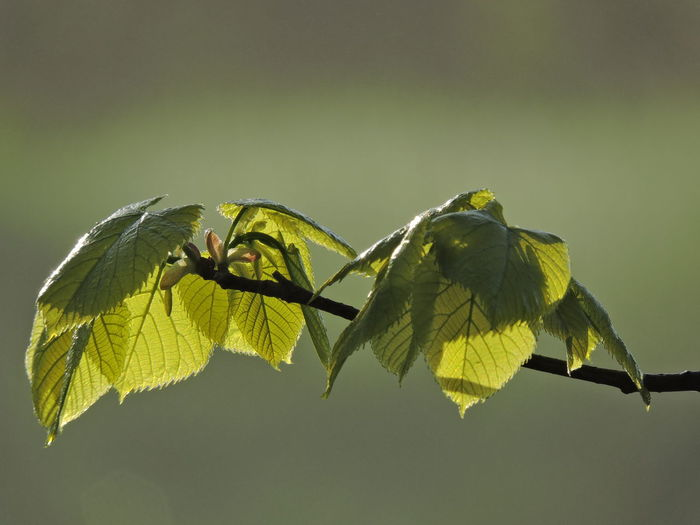 New Growth Springtime Plant Close-up Beauty In Nature Leaf Nature Plant Part Growth No People Yellow Focus On Foreground Vulnerability  Fragility Green Color Flower Copy Space Outdoors Freshness Flowering Plant Plant Stem Day
