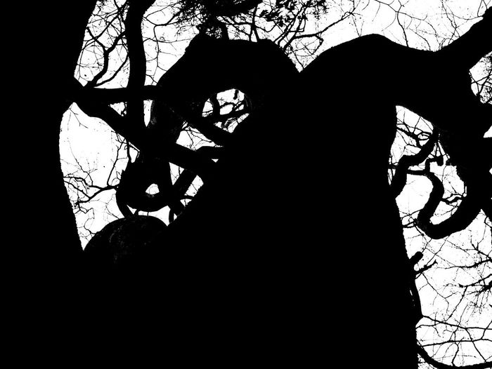 Tree Branch Low Angle View Nature No People Sky Close-up Day Outdoors Sillouette Cumbernauld Scotland Scotland 💕 Scotlandsbeauty Scotlandpassion Black And White B&w Finding New Frontiers
