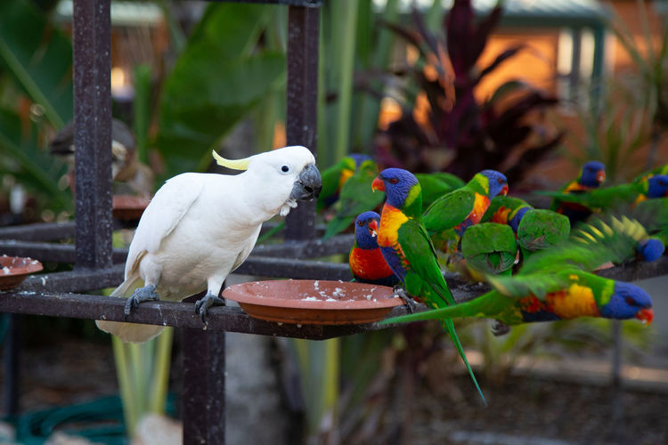 Close-up of birds perching on plant