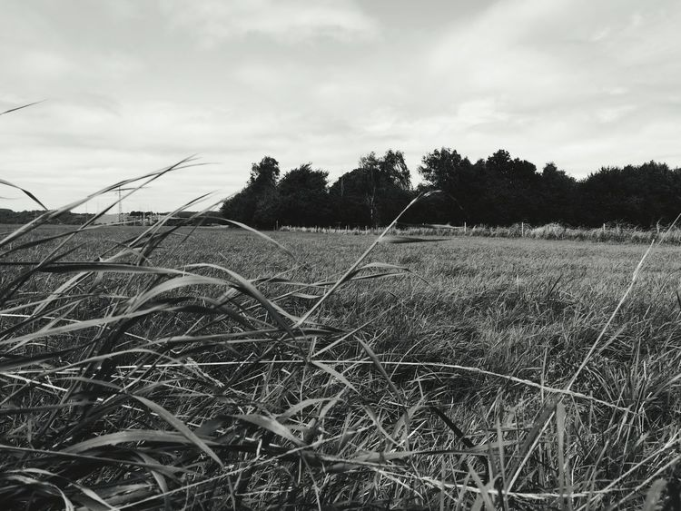 Nature Simply Life Black And White Black And White Photography Rural Fields Welcome To Black