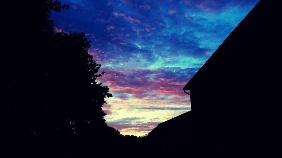 My Backyard LG