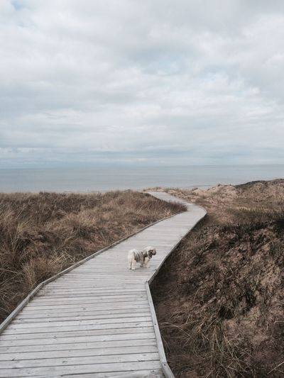 Dog Standing On Boardwalk Leading Towards Sea Against Cloudy Sky