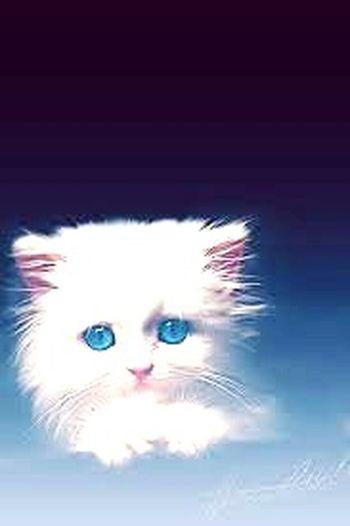 beautiful cat.. Party Time! The Amazing Human Body Balti Hicham.
