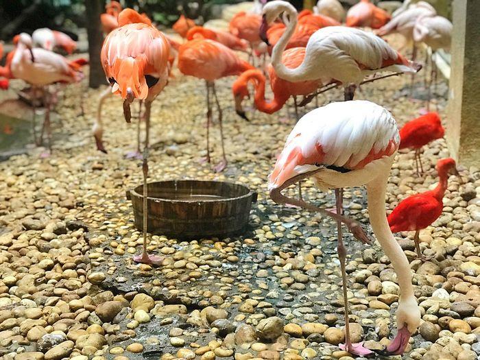 Flamingo Group