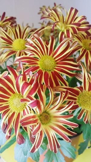 Flower Head Flower Close-up Plant