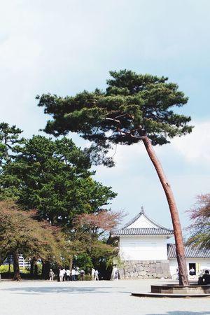 小田原城 JJapanese CastleJJapan