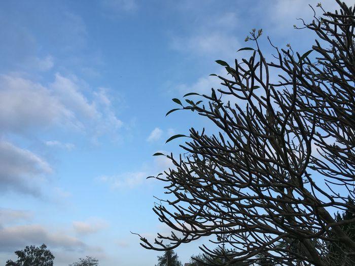 Nice weather 👍 First Eyeem Photo
