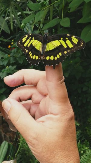 Touching nature Human Body Part Human Hand Human Finger Real People Holding Close-up Outdoors Plant Nature Fragility Butterfly Insect Butterfly On My Finger Beauty In Nature Touching Moments Travel EyeEm Gallery EyeEm Selects Taking Photos EyeEm Nature Lover