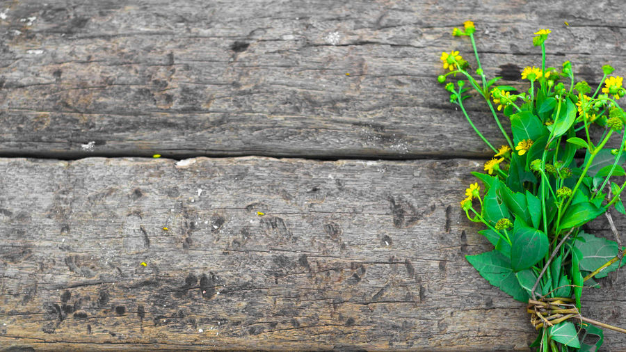 wild yellow flower on wooden background. Copy Space Summertime Textured  Blossom Bouquet Of Flowers Close-up Day Florals Food Freshness Green Color Growth Healthy Eating Leaf Nature No People Outdoors Plant Spa Time Wild Flower Wood - Material Wooden Background