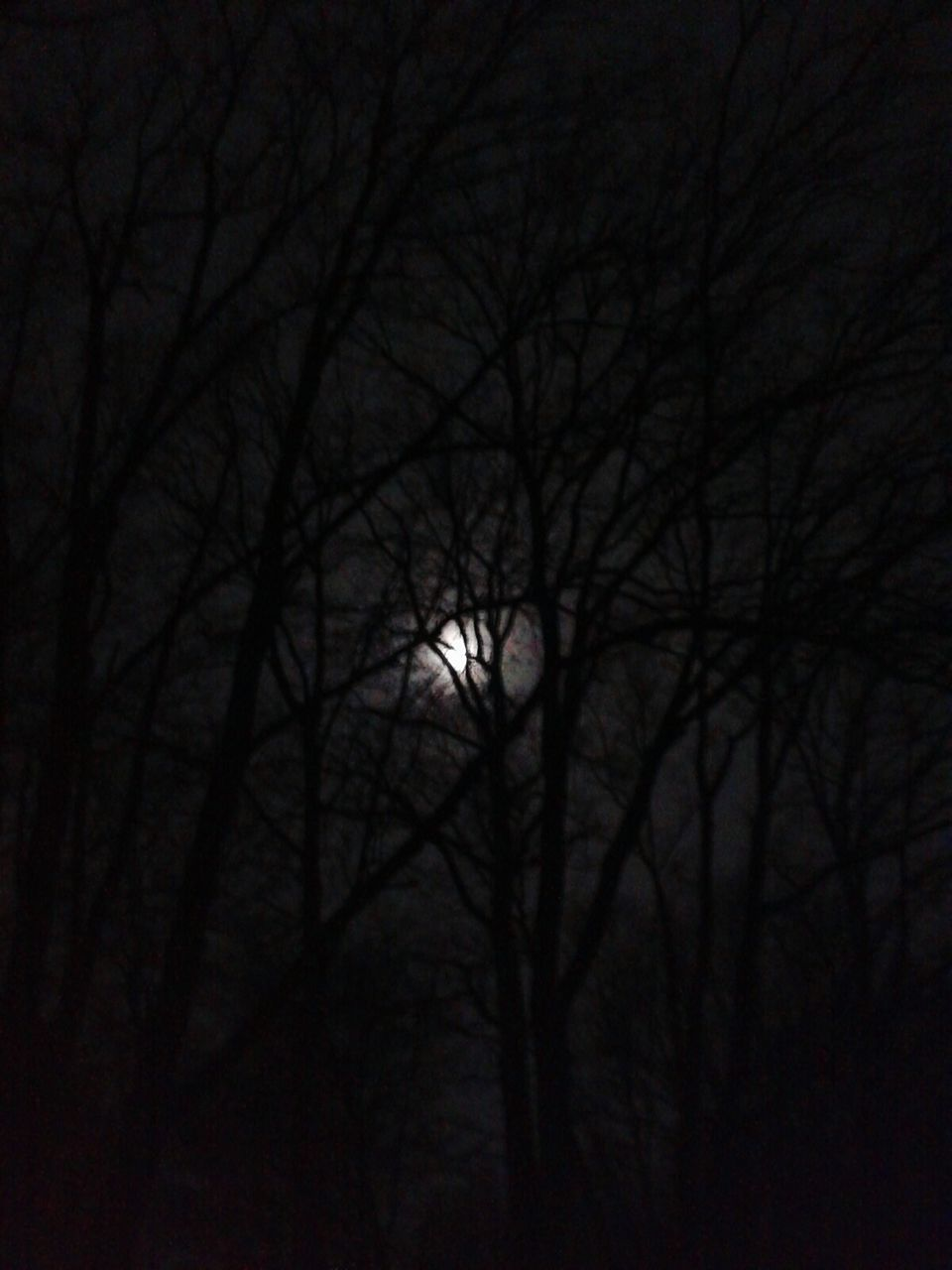 bare tree, night, tranquility, nature, moon, branch, beauty in nature, tranquil scene, tree, scenics, outdoors, astronomy, no people, solar eclipse, sky