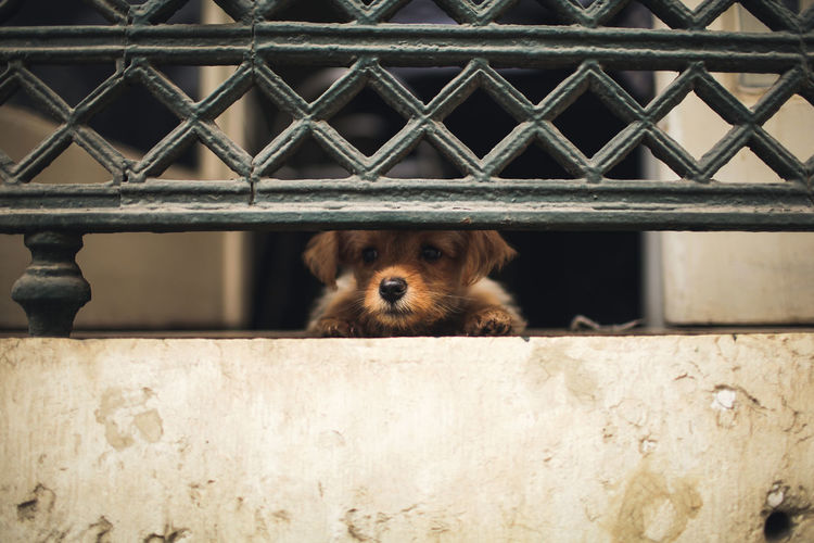 Animal Themes Baby Dog Balcony Close-up Curiosity Day Dog Dog Eyes Domestic Animals Looking At Camera No People One Animal Outdoors Pets Portrait Puppy Street Photography Streetphotography