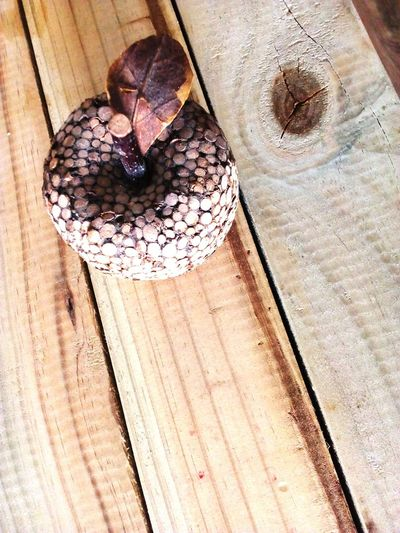 Earthy Tone Close-up Apple - Wooden Ornamental Wooden Board Wood - Material No People Day Close-up Indoors