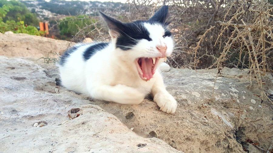 Mid Yawn