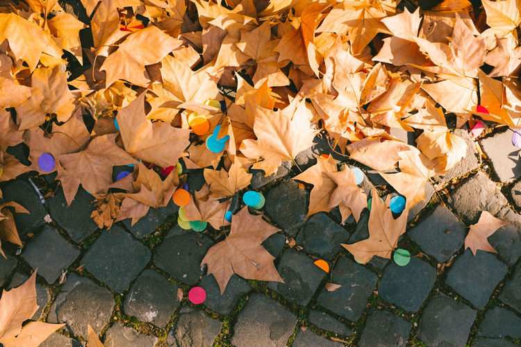 High angle view of confetti and fallen dry leaves on cobbled footpath