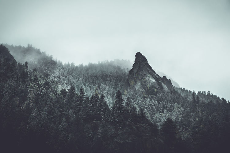 Beauty In Nature Coniferous Tree Day Environment Fog Forest Growth Land Landscape Mountain Mountain Peak Nature No People Non-urban Scene Outdoors Plant Remote Scenics - Nature Sky Tranquil Scene Tranquility Tree