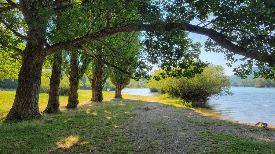 Scenic view of lake amidst trees