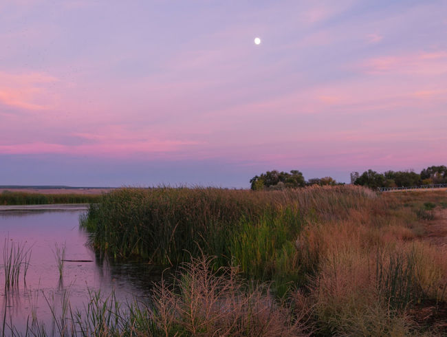 Pink sky sunset Beauty In Nature Calm Cloud - Sky Everyday Emotions Field Grass Grassy Growth Landscape Moon Moonlight Nature Non Urban Scene Outdoors Pink Skys Plant Remote Riverbank Riverscape Rural Scene Scenics Sky Sun Sunset Tranquil Scene