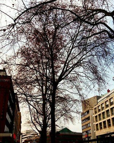 Bare Tree No