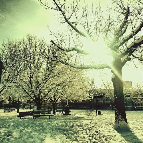 The Places I've Been Today Snow Snowy Trees Snowy Walk Snowy Scene Snowy Day In The Park City Park A Walk In The Park