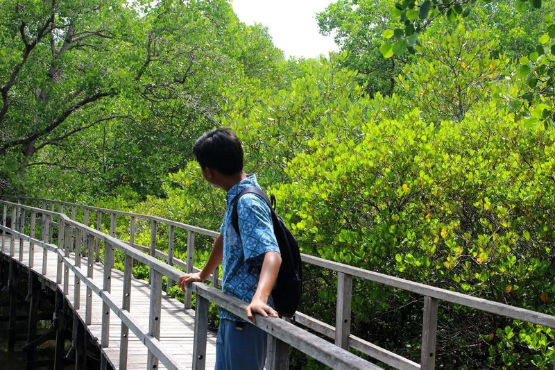 Mangrove forest conservation area, Mangrove Mangrove Forest Nature Greenish Leaf Sunny Day EyeEm Selects Tree Child Childhood Boys Full Length Standing Railing Elementary Age Sky Casual Clothing Footbridge Covered Bridge Bridge Plant Life Bridge - Man Made Structure Stream Blooming Underneath Growth Growing Petal Arch Bridge The Great Outdoors - 2018 EyeEm Awards