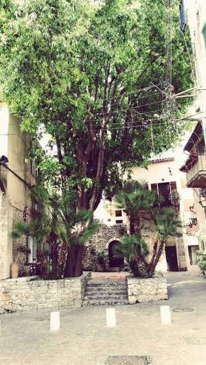 Day Tree Architecture Growth Built Structure No People Outdoors Building Exterior Plant Nature City Europe Antibes France Flowers Plants Green Sky Tree Chilling Landscape