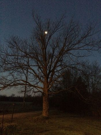 Beautiful moon in the tree