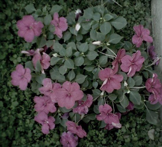 Flower ? Flower Love Pink