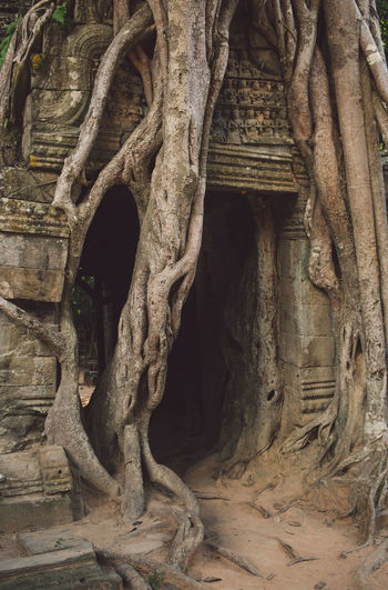 Siem Reap Cambodia Angkor Architecture Spirituality History Religion The Past Belief No People Built Structure Ancient Place Of Worship Travel Destinations Art And Craft Tourism Craft Travel Building Tree Creativity Human Representation Sculpture Ancient Civilization Outdoors Archaeology