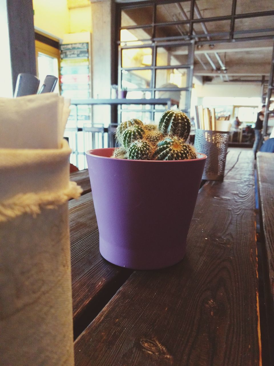 indoors, potted plant, table, no people, close-up, food and drink, focus on foreground, still life, food, growth, plant, day, wood - material, cactus, freshness, nature, business, restaurant, succulent plant, flower pot