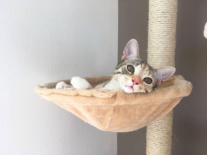 Portrait of cat lying on blanket