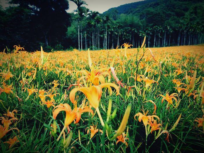 Flower Flower Head Tree Field Summer Grass Plant Landscape