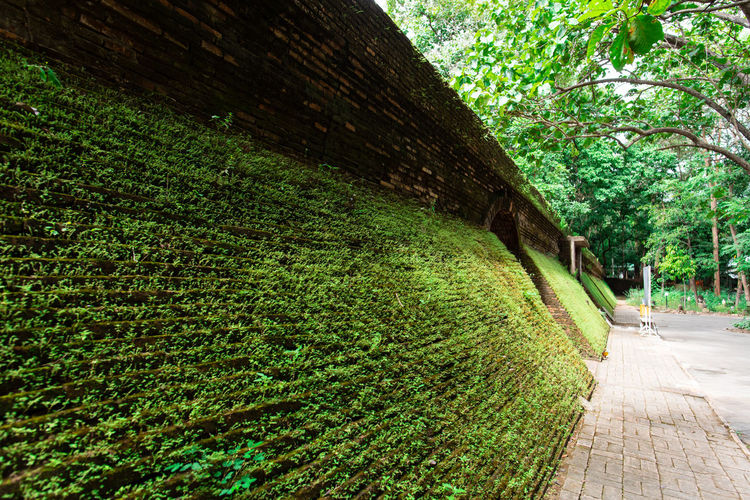 Ancient tunnel in Wat Umong temple, Chiangmai, Thailand Temple Chiangmai Thailand ASIA Asian  Religion Buddhism Buddhist Architecture Ancient Tunnel Outdoor Wat Umong Worship Green Building Fresh Sacred Place Brick Wall Plant Tree Green Color Nature Built Structure Outdoors