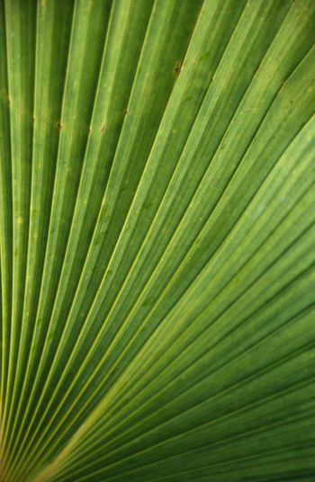 Detail shot of palm frond
