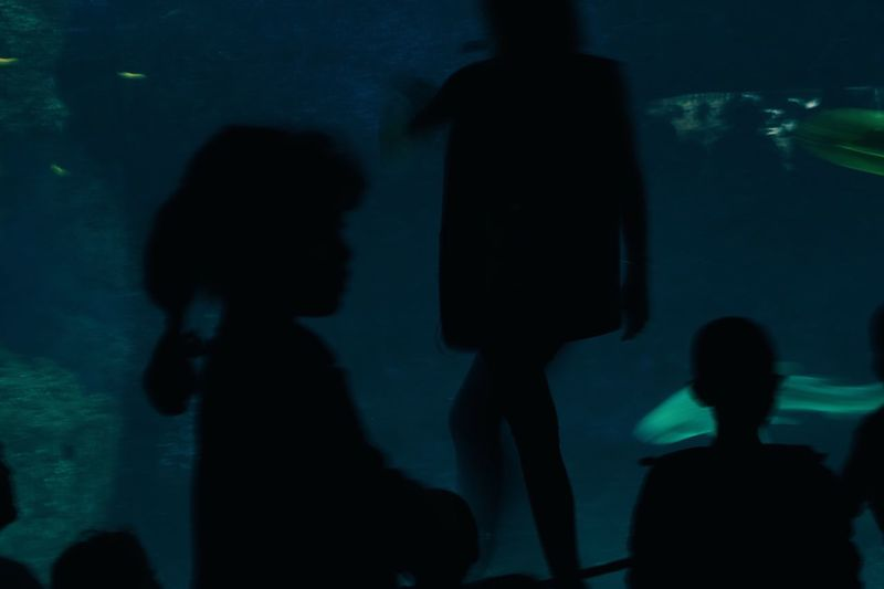 First Eyeem Photo Silhouette Lifestyles Aquarium Water Color Photography Colors Streetfashion Streetphotographer Streetphoto Street Life Indoors  Real People