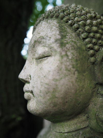 Buddha Architecture Art And Craft Buddha Head Close-up Craft Creativity Day Focus On Foreground History Human Representation Male Likeness Nature No People Old Outdoors Plant Profile View Religion Representation Sculpture Statue Stone Material