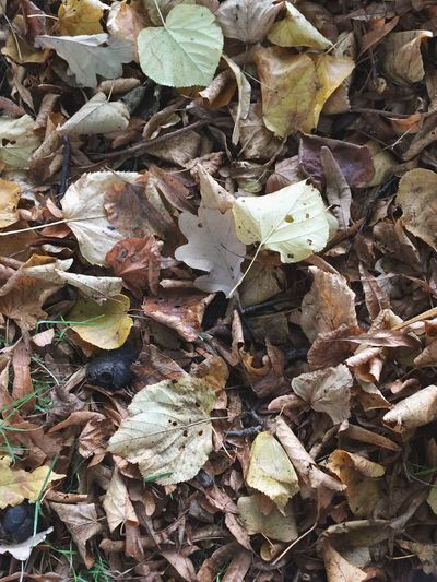 Leaf Plant Part Leaves Dry Full Frame Autumn No People