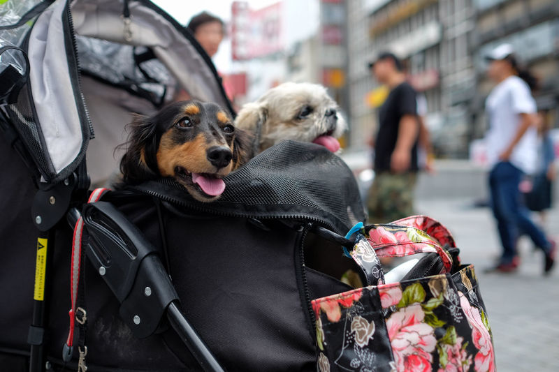 Two Dogs In Carrier