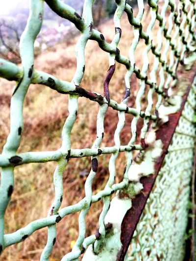 Close-up Fence Nature Outdoors Metal Rust Green Turquoise Old Patina Paint Crosing Lines And Patterns Country Gate