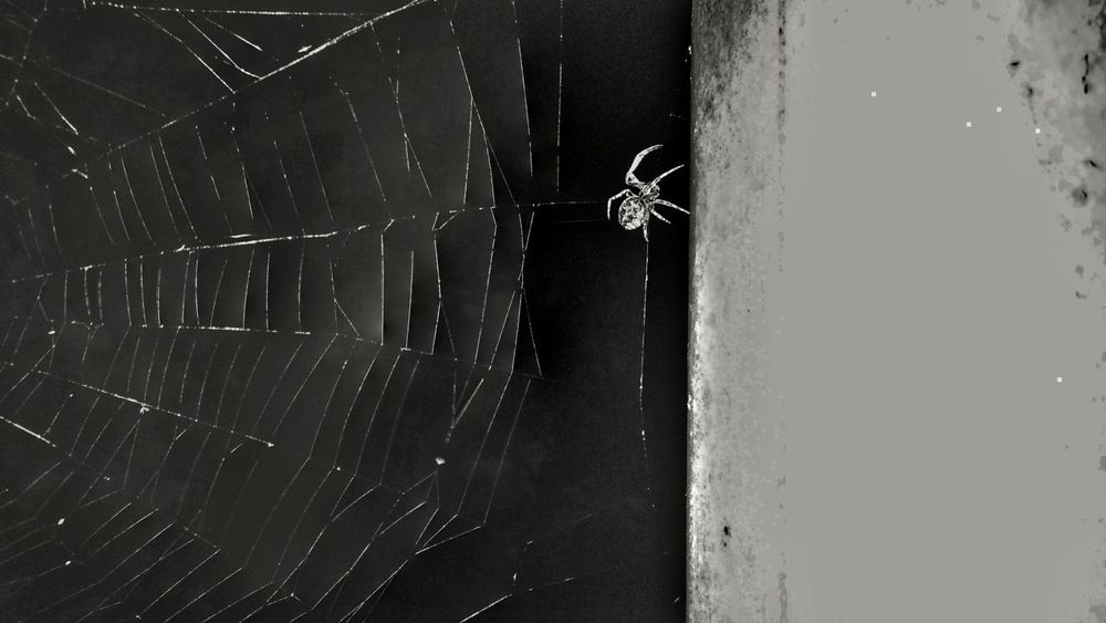 Spider Web Spider Web I See A Face Skull Spider Webs Spider Nature_collection Eyenaturelover Spider Series Hdr Snapseed Flash Photography Flashback Friday Night Photography Nature Photography I See Faces Hello Darkness My Old Friend Garden Spider Arachnid Photography Spider Silk For The Love Of Black And White Black And White Architecture Natures Architecture Small World