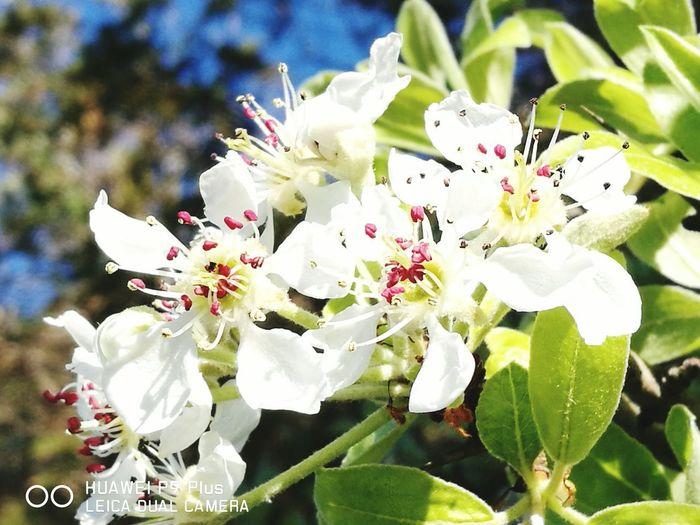 Nature Plum Blossom Springtime