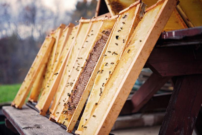 Worker bees Fresh Honey HoneyBee Honey Bee Worker Bees Honeycomb