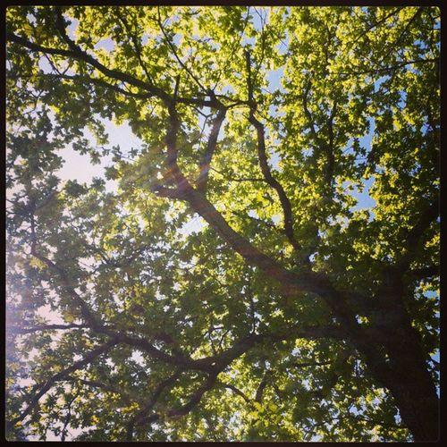 Barbadas Tree Green Nature instanature instatree today now good instamoment sky jj love