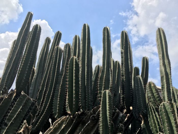 Sky Growth Plant Low Angle View Nature No People Day Cactus Cloud - Sky Beauty In Nature Outdoors