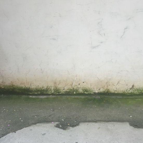 雨後的青苔 Moss Wall No People Wet Water Drop Day Rain Nature Road Rainy Season