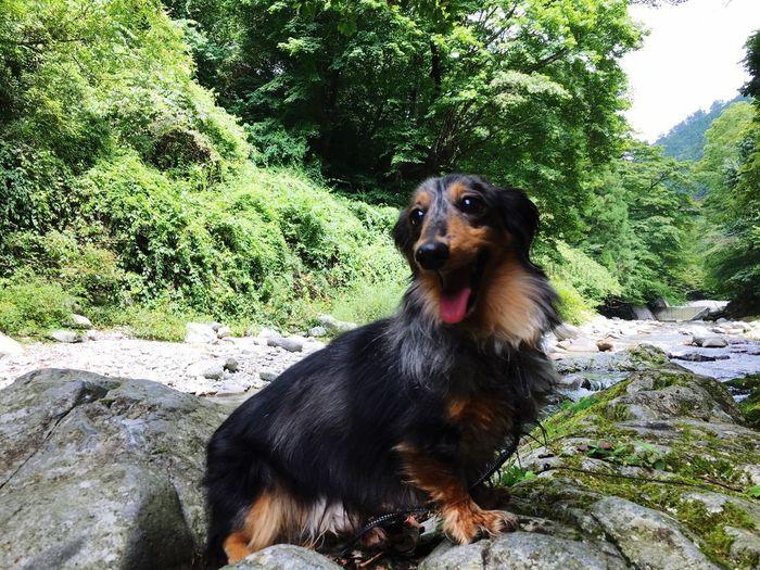 大自然 山 Mountain 森 犬 Dog Cheese! Hi! Enjoying Life Forest Japan 風景 Fishing Landscape River Dog Love Mydog Animals